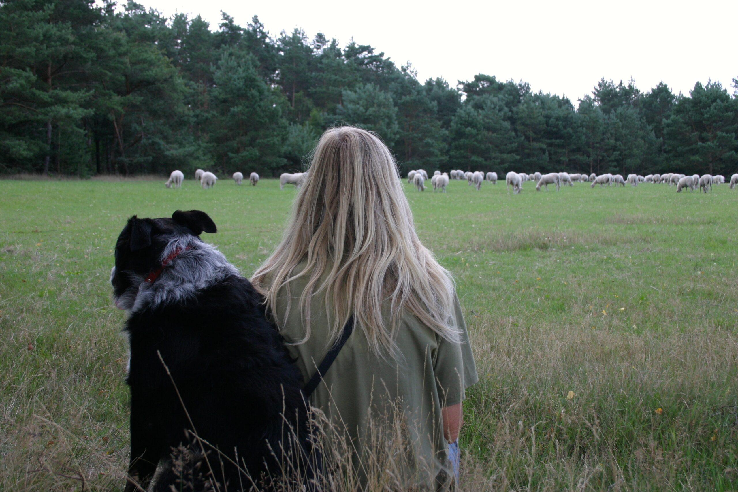 Kijkend naar de schapen die rustig grazen.