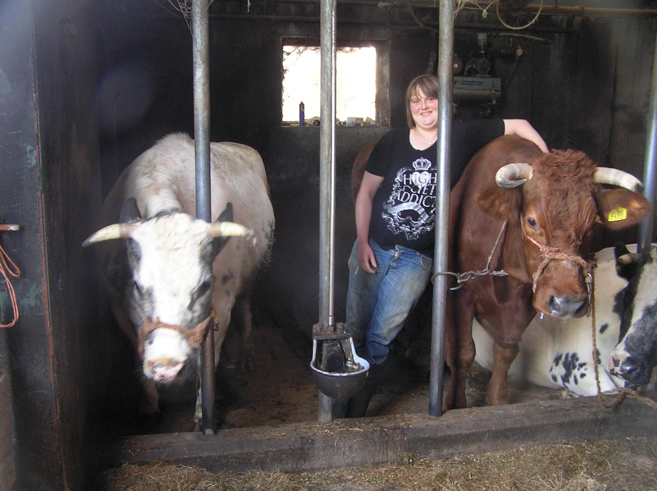 Gerrie in de koeienstal