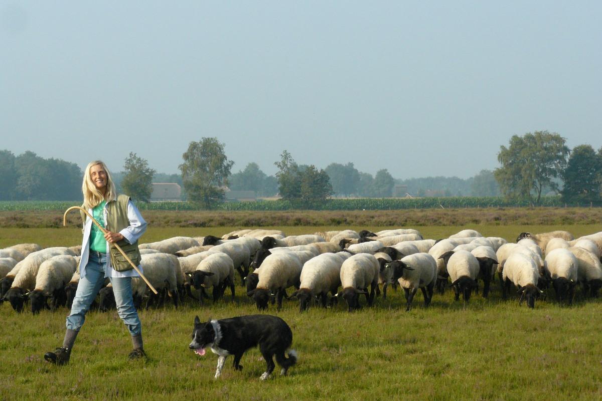 Christien met hond en schapen aan de rand van de heide